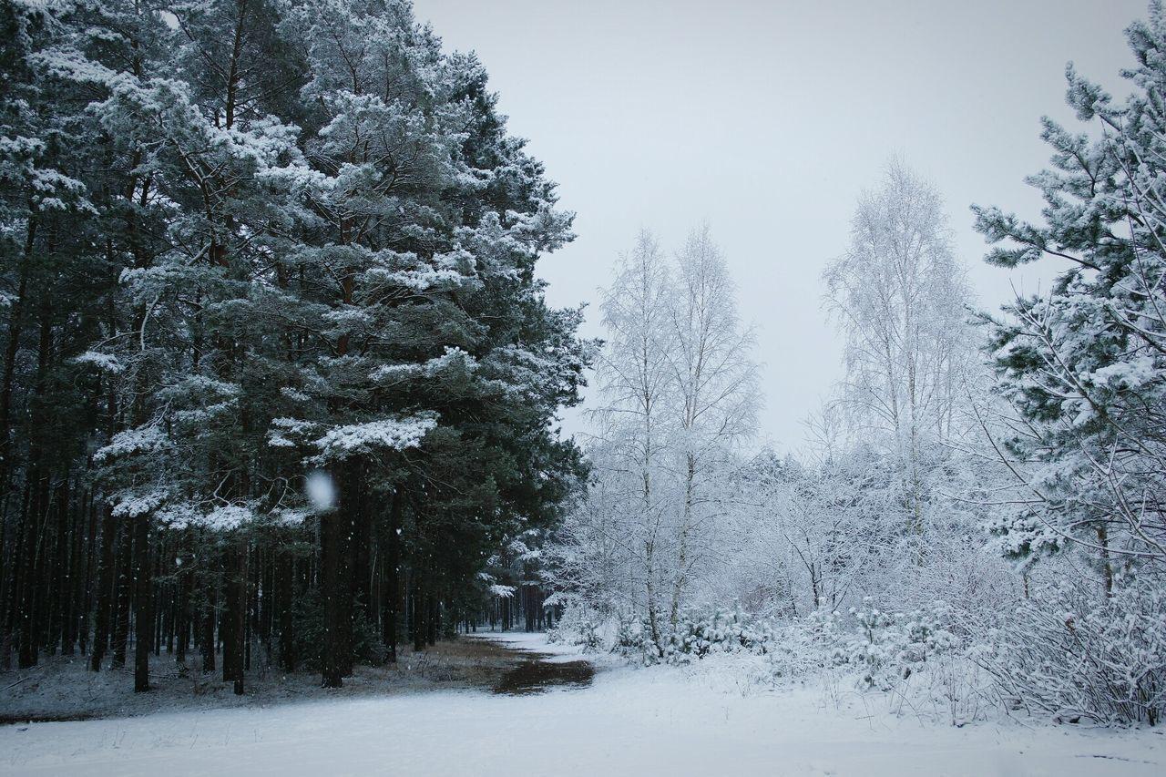 Winter Wonderland Winter Snow ❄ Exploring Nature Wanderlust Open Edit Nature_collection EyeEm Best Shots - Landscape Landscape_photography Landscape_Collection