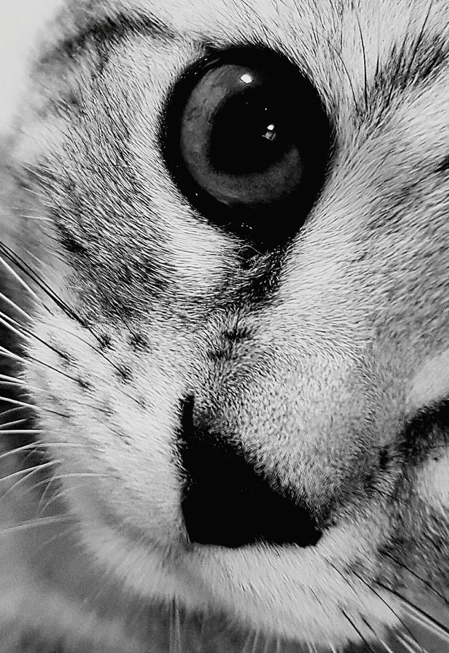 Furryfriend Furry Cat Blackandwhite Eye