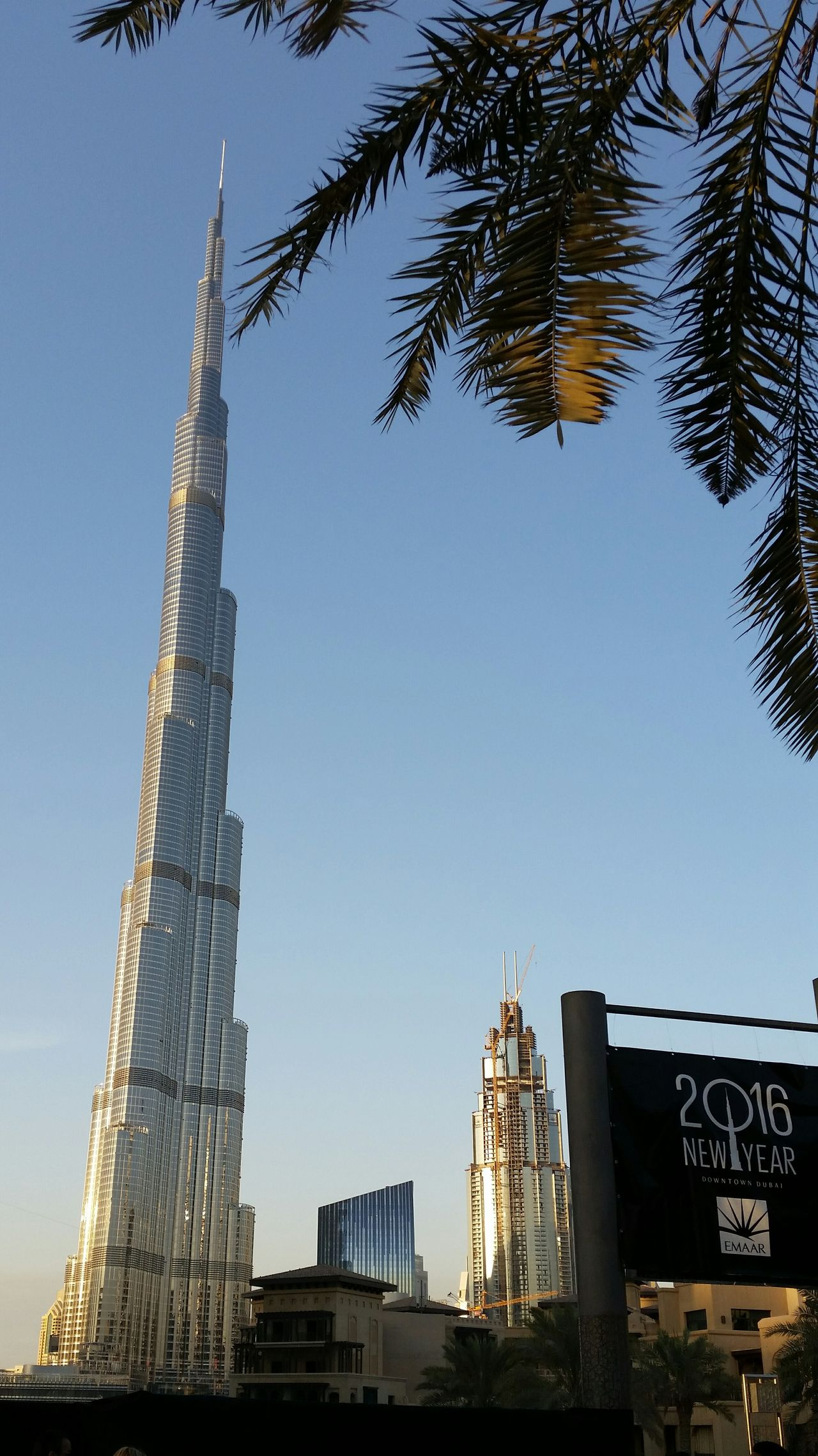Burj Khalifa New Year Is Coming Dubai Palm Tree Streetphotography Street Photography Streetview Festivity New Year Celebration Skyscraper