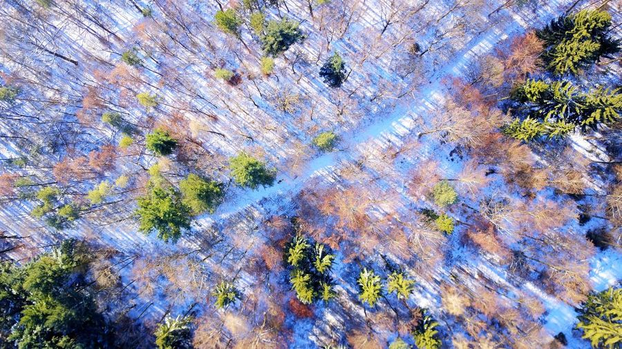Drones Droneshot Dronephotography Drone  Dji Mavic Snow Forest Full Frame Nature High Angle View No People Day Outdoors Backgrounds Water Beauty In Nature Close-up