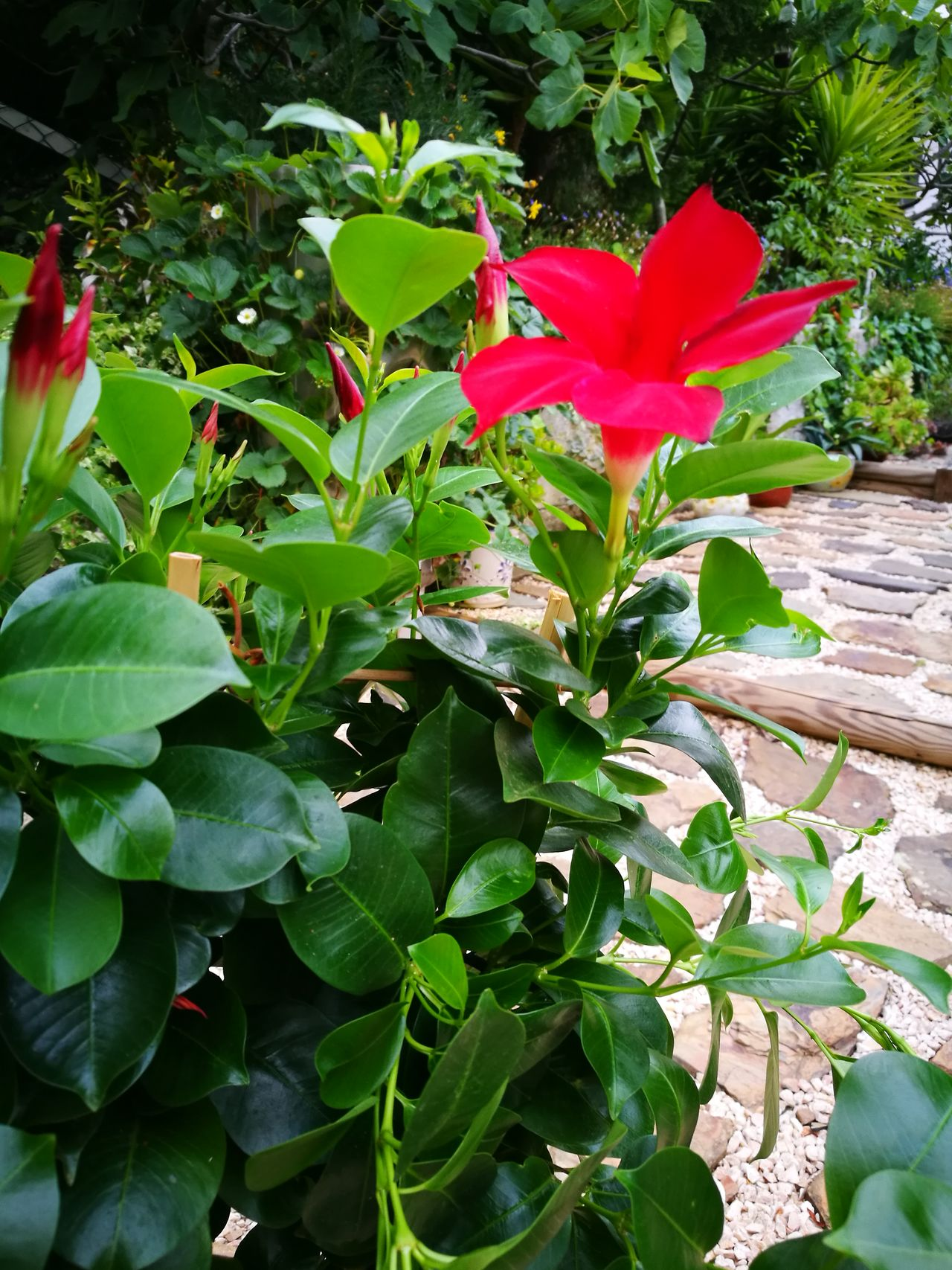 Leaf Plant Growth Nature Red Green Color Flower No People Outdoors Day Beauty In Nature Close-up Flower Head Fragility Freshness