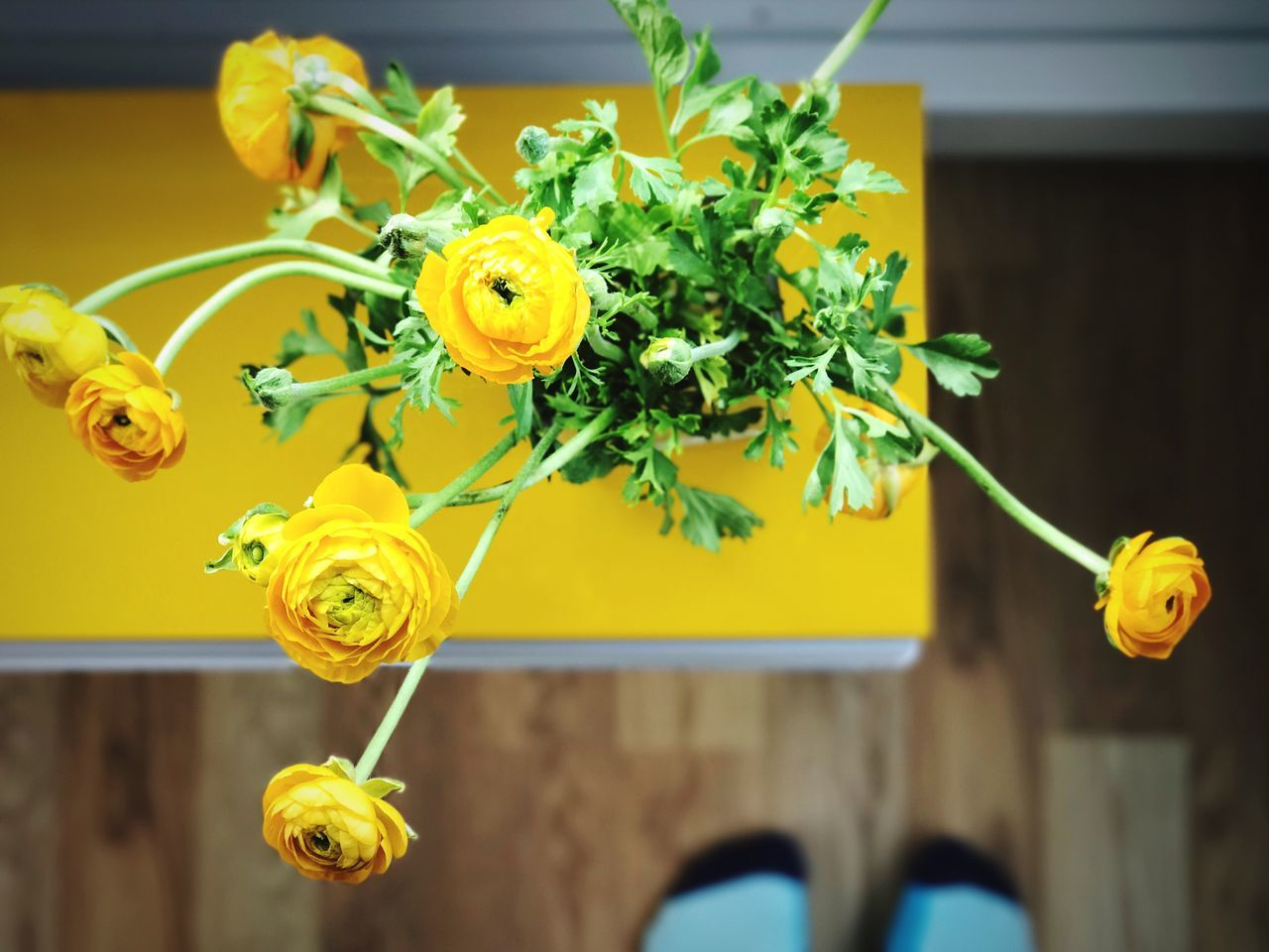For the love of yellow // Yellow Flower Fragility Freshness No People Close-up Leaf Nature Animal Themes Flower Head Beauty In Nature Day Indoors