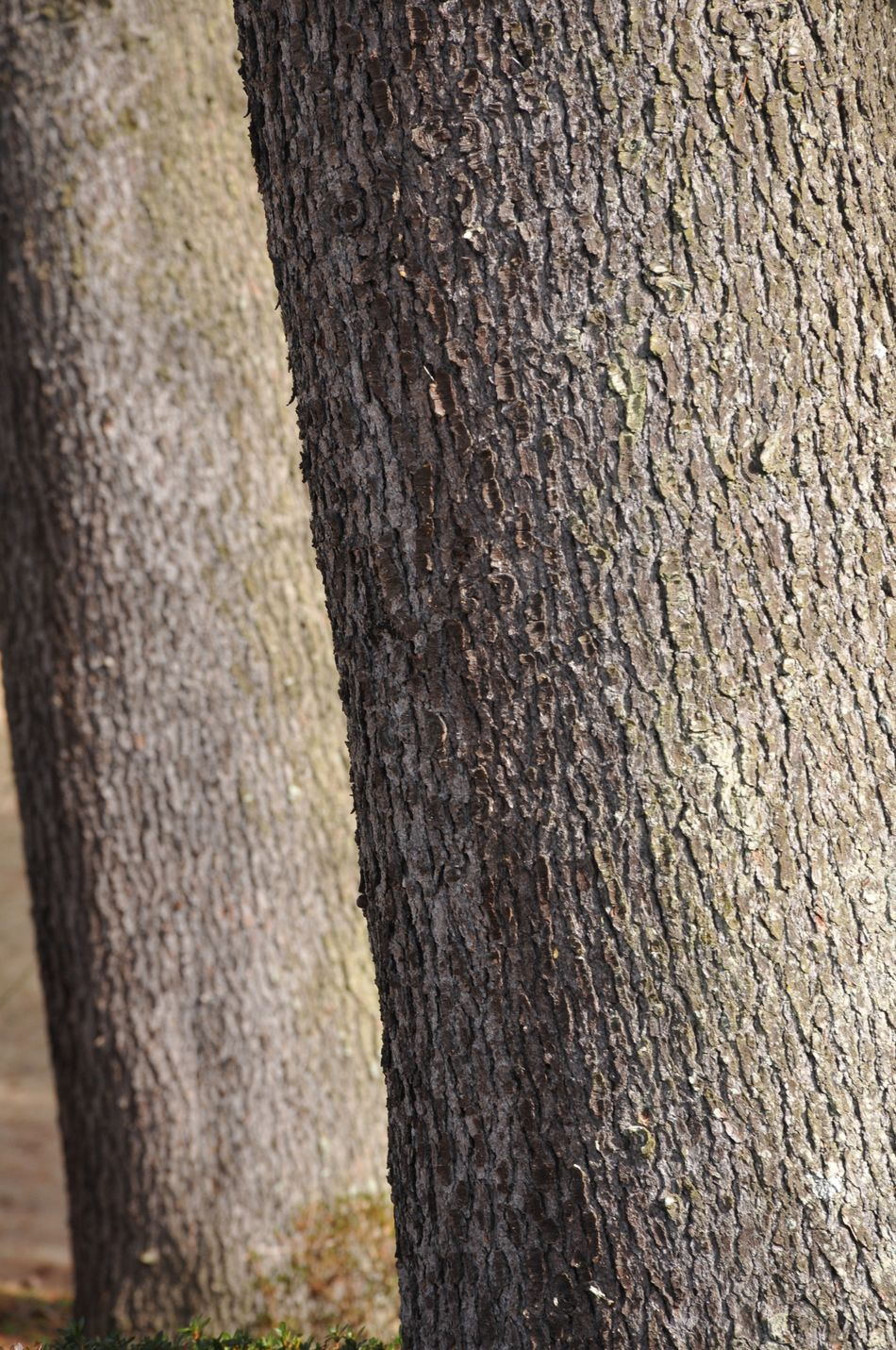 Tree Tree Trunk Textured  Full Frame Nature Close-up Plant Bark Backgrounds Growth No People Rough Bark Day Outdoors