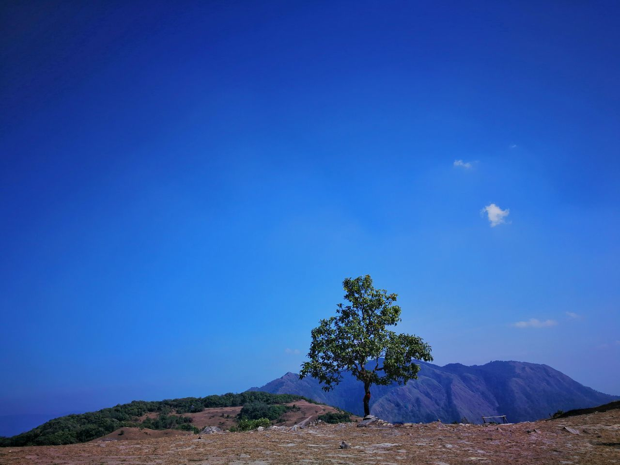Alone and lonely. Lanscape Landmark Terrace Tree Meadow Top Adventure Romance Beautiful Beauty Mountain Hills Sunny Hight Cloud Blue Sky Countryside Rural Sunshine Forest Light Environment Sun Standing