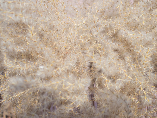 Beige Close Up Close-up Fluffy Grass Pastel Pastel Colors Pastel Power Pink