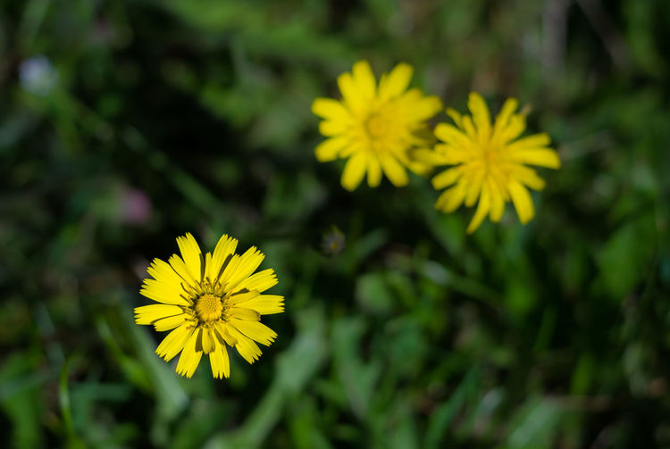 Paint The Town Yellow Beauty In Nature Blooming Close-up Flower Flower Head Fragility Growth Nature Plant Yellow