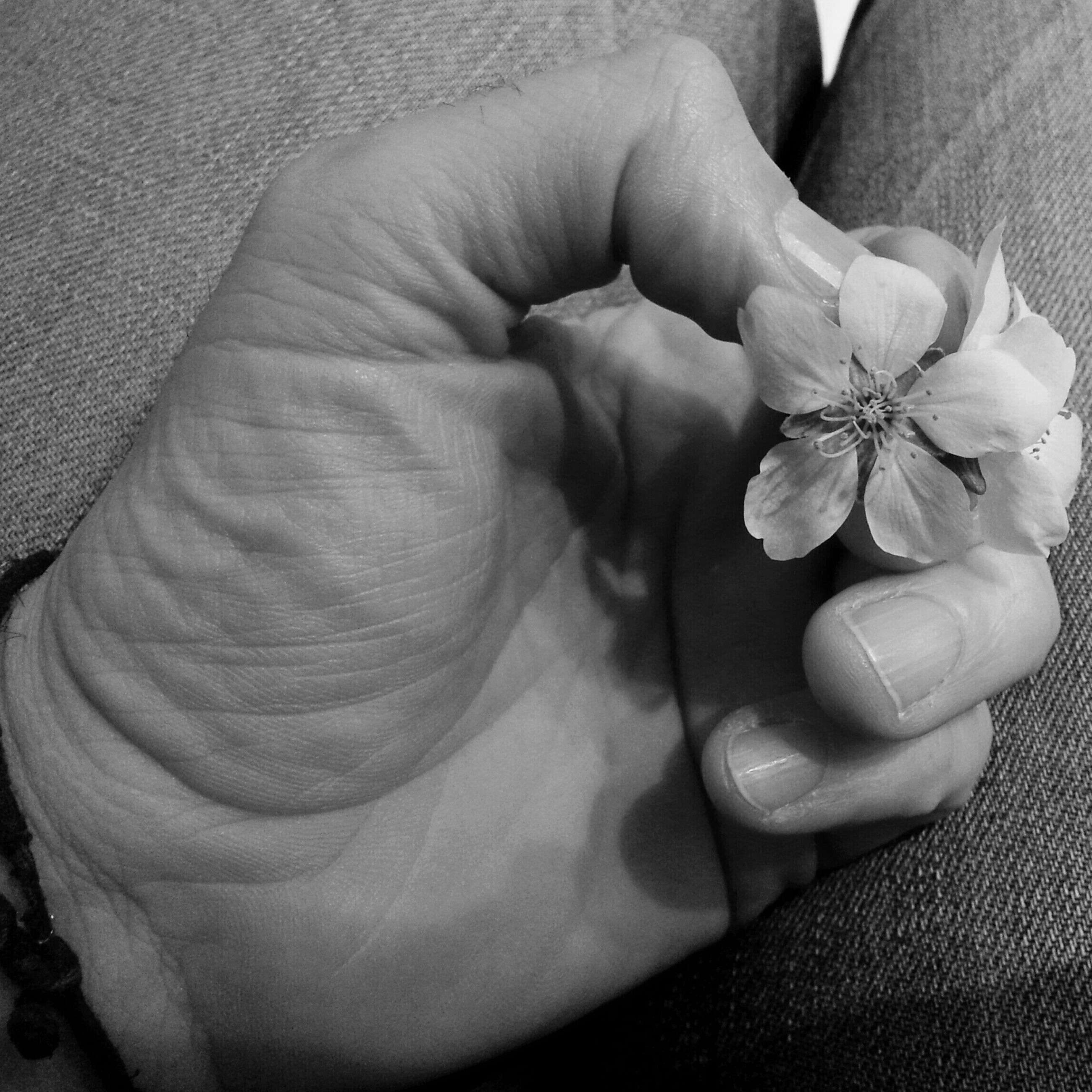 person, holding, part of, flower, lifestyles, fragility, freshness, cropped, human finger, leisure activity, close-up, men, high angle view, love, bonding