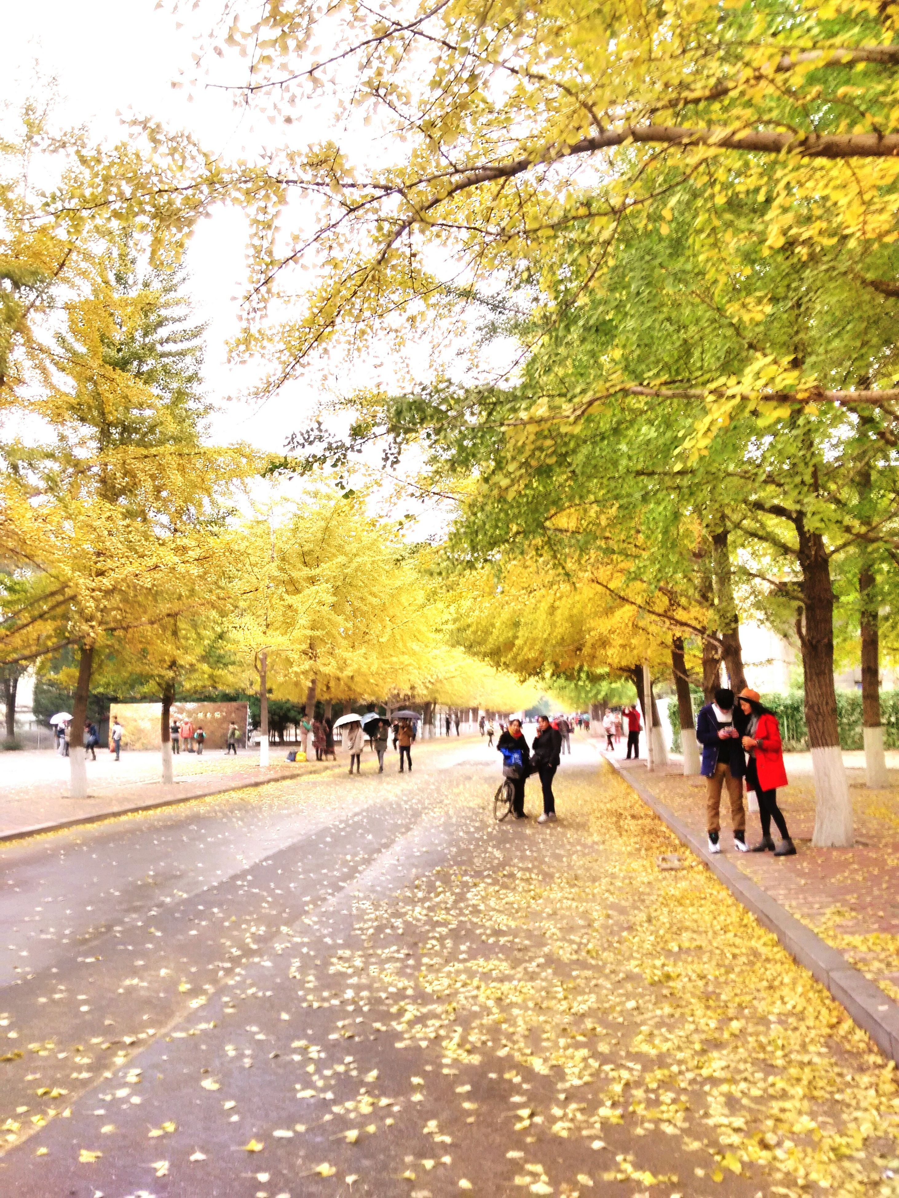 tree, men, person, walking, large group of people, lifestyles, leisure activity, autumn, street, treelined, road, growth, change, the way forward, mixed age range, park - man made space, footpath, branch, medium group of people