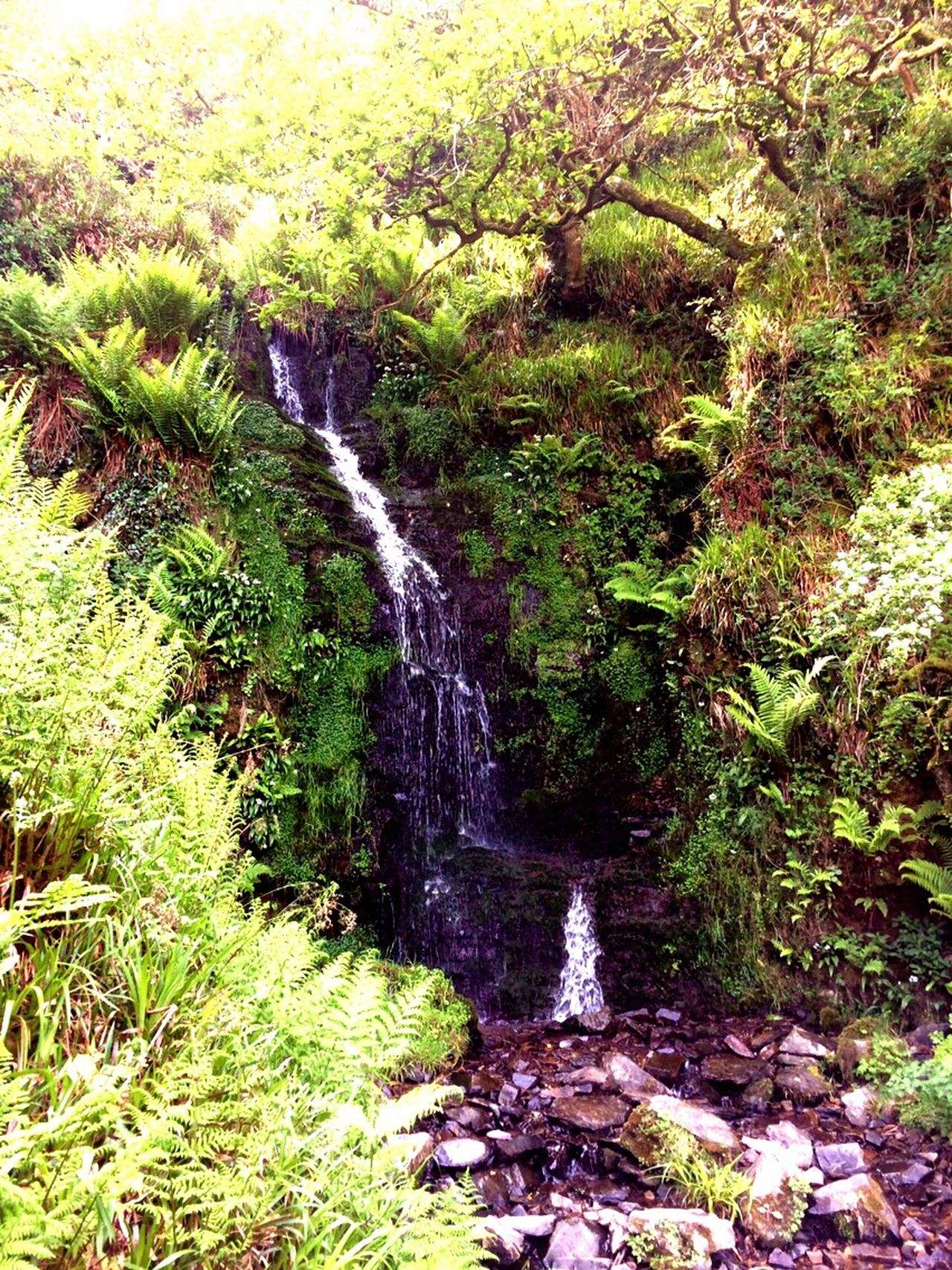 The natural down fall Nature Water Flowing Water Beauty In Nature Forest Stream Waterfall No People Day Outdoors Grass Tranquility Green Color Motion Tranquil Scene Scenics Growth Tree North Devon HeddonsMouth