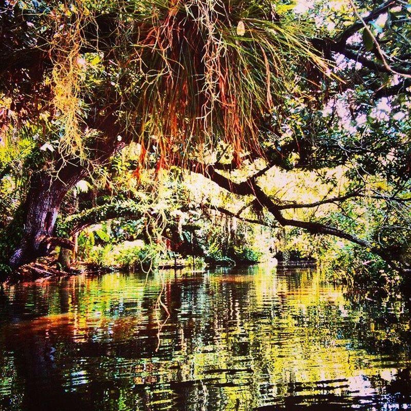 Reflections on water Naturecolor Outdoors Kayaking Summerinflorida