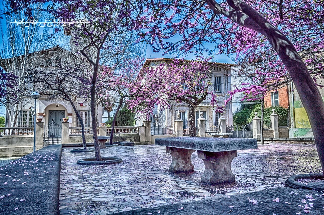 Plaza de los enamorados. Tree Built Structure Building Exterior Architecture Outdoors No People Day Nature Flower Animal Themes Beauty In Nature Sky Cornellà Barcelona Landscape Catalunya Followme Nice Nikon