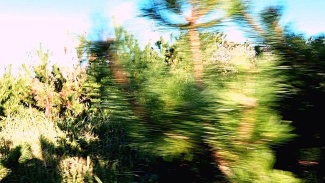 ムナサワギ Bad Feeling Panic Run Run Run Sprint Early Morning Animal Trail