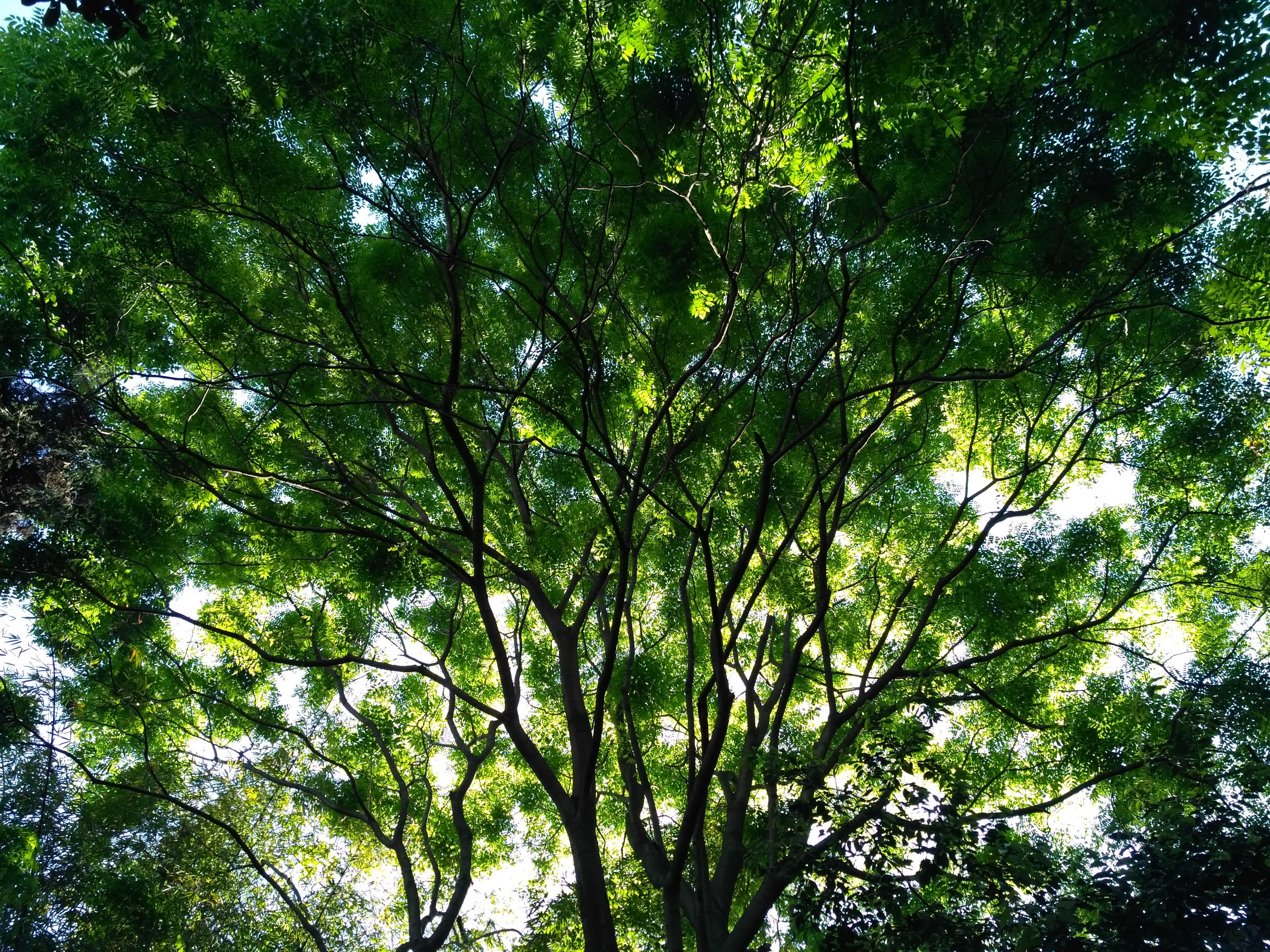 nature, tree, forest, low angle view, growth, beauty in nature, day, no people, tranquility, outdoors, branch
