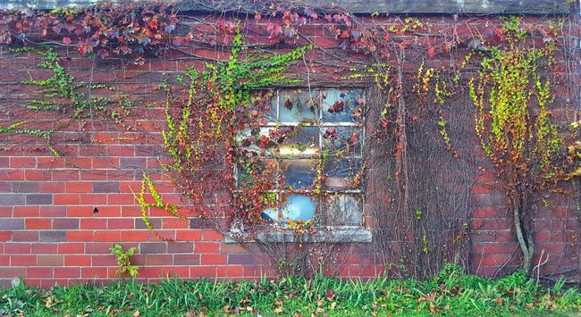 Nature Multi Colored Full Frame Brick Wall Backgrounds No People Complexity Architecture Outdoors Close-up Day Built Structure Architecture Foliage, Vegetation, Plants, Green, Leaves, Leafage, Undergrowth, Underbrush, Plant Life, Flora Brick Walls Window Living Organism