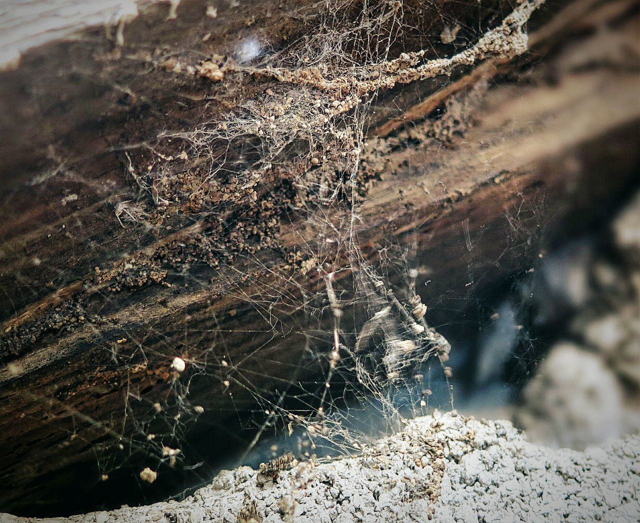 https://youtu.be/DniLmS-vm5M (....) Seeing Things Walking With You Minimalobsession Spiderweb Lostplaces EyeEm_abandonment EyeEm Best Edits Taking Photos Infinite Sadness Textures And Surfaces