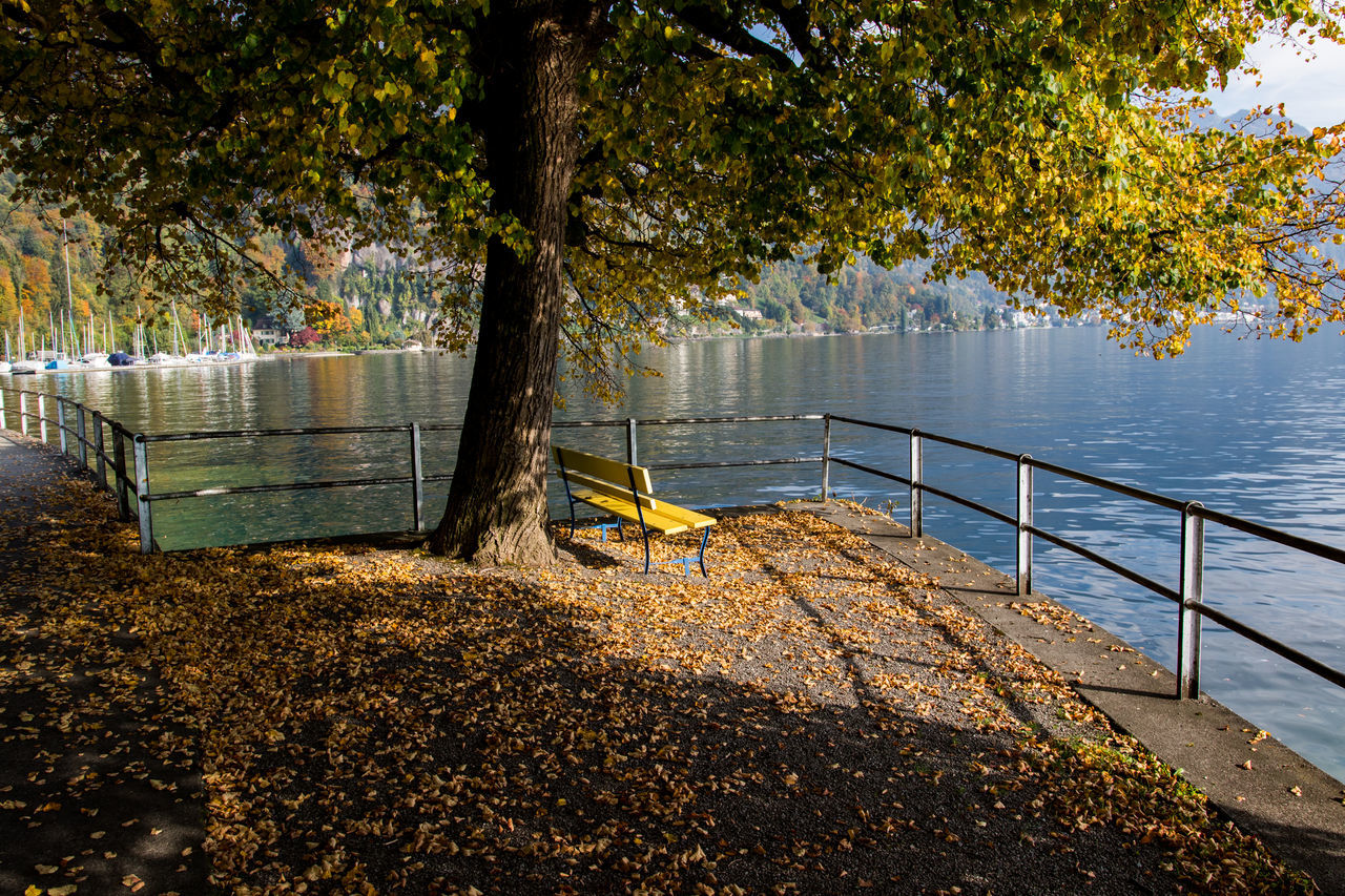 A tree by the lake in autumn. Beauty In Nature Lake Nature No People Outdoors Scenics Tranquility Tree Water