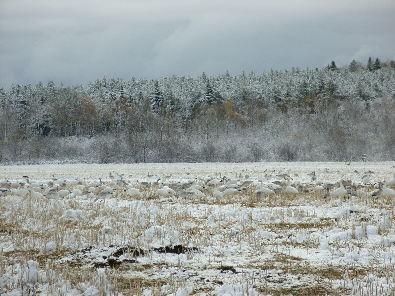 Bare Tree Beauty In Nature Cold Cold Temperature Day Frost Frozen Frozen Lake Ice Lake Long Goodbye Nature No People Outdoors Saguenay, Québec, Canada Scenics Sky Snow Tranquil Scene Tranquility Tree Weather White Gooses Winter EyeEmNewHere The Great Outdoors - 2017 EyeEm Awards