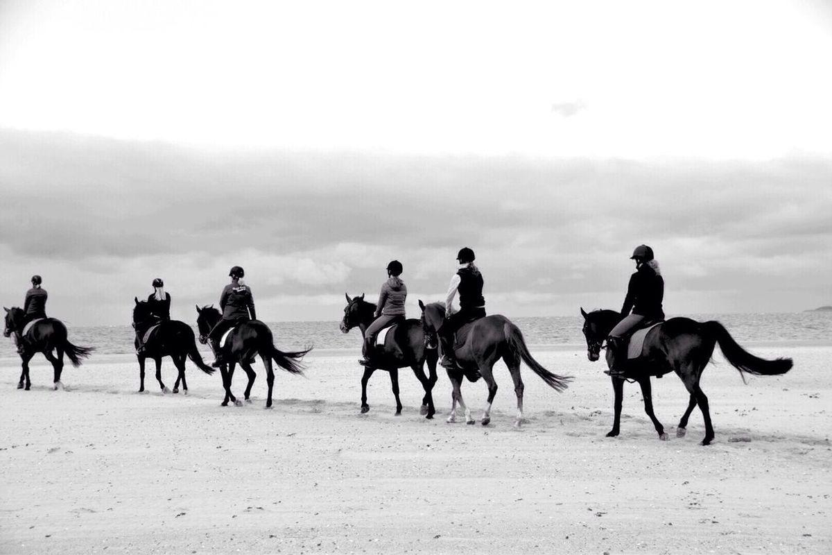The Week On Eyem Horses Horse Riding Horse Photography  Beach Photography The Great Outdoors - 2016 EyeEm Awards
