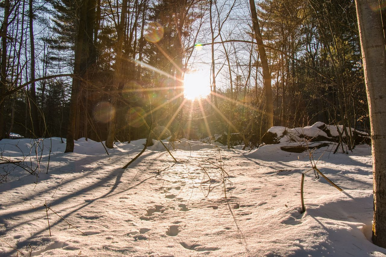 Dreams Snow Winter Cold Temperature Sunlight Tree Sun Lens Flare Sunbeam Nature Beauty In Nature Outdoors Scenics Landscape Day Tranquility No People Sky Nature Leaf Winter Detail Arts Culture And Entertainment Fineart_photo Canon Canon70d