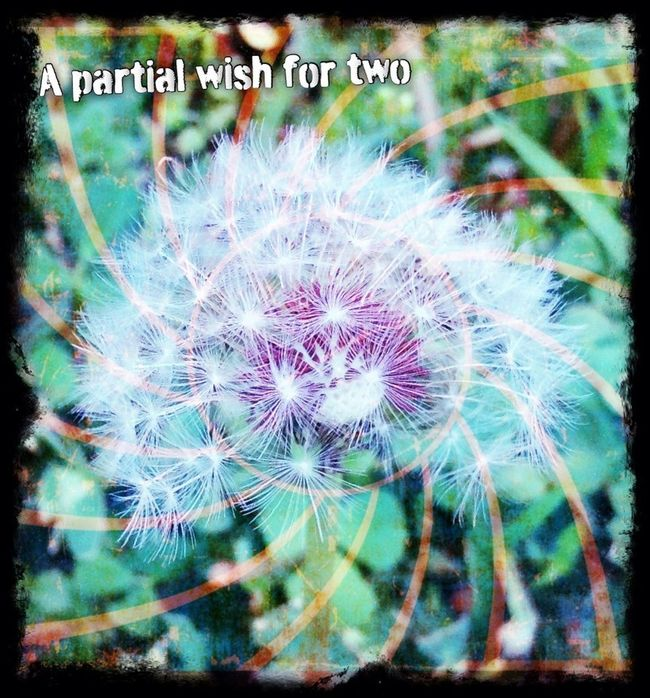 A Wish For Happiness