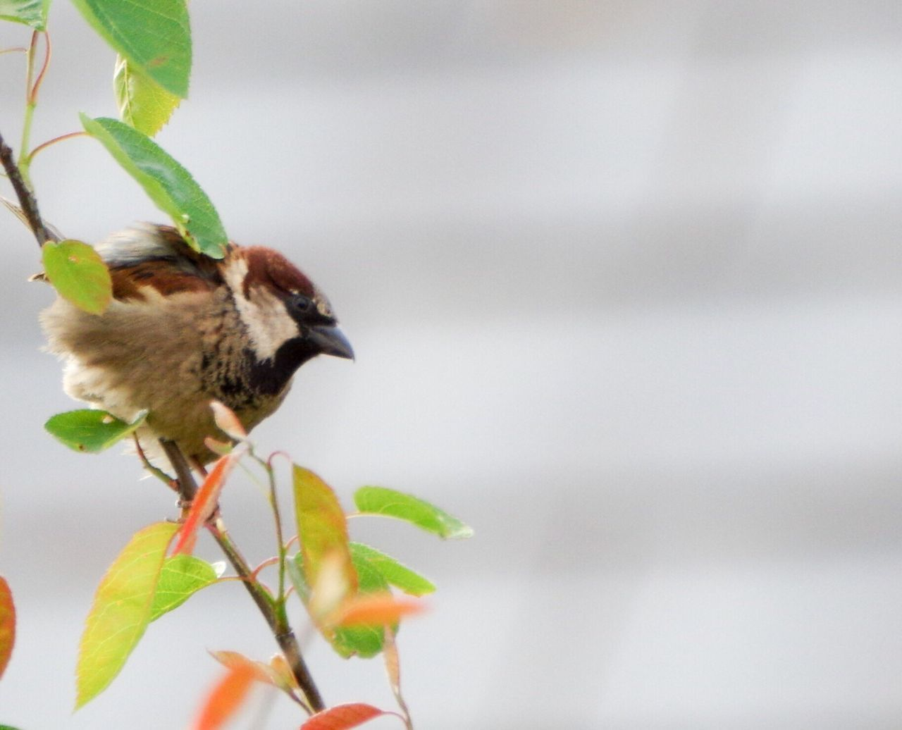 leaf, animals in the wild, animal themes, plant, nature, bird, growth, one animal, no people, animal wildlife, day, perching, outdoors, beauty in nature, close-up
