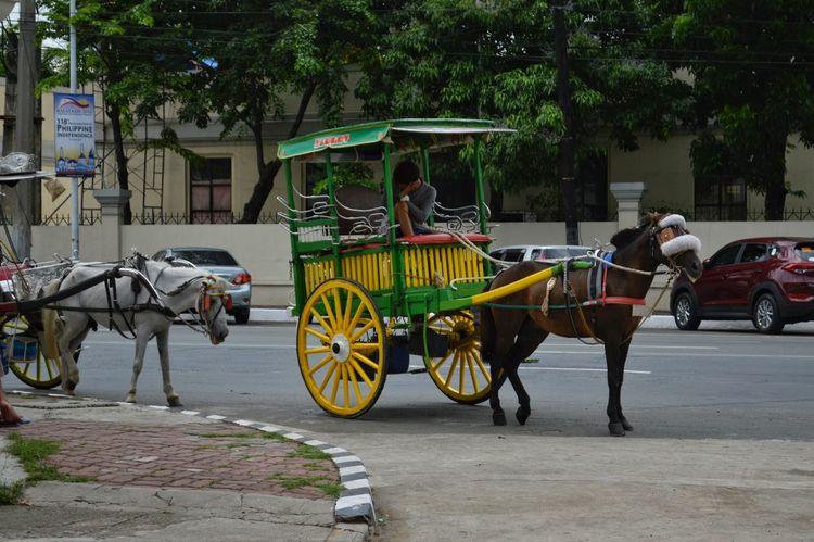 Bored Kuyang Kutsero waiting for a passenger. Feel The Journey Intramuros,Maynila PhilippineIndependenceDay Philippines Kalesa Eyeem Philippines Eyeem Photography