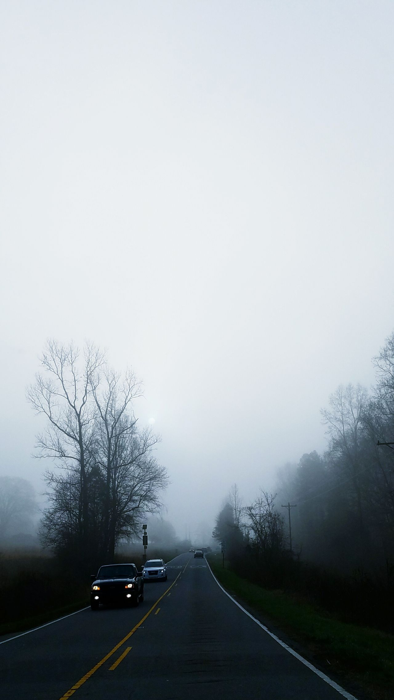 Sun & Fog Sun Fog Foggy Foggy Morning Weather Road NC Beauty In Nature Background Backgrounds Full Frame The Way Forward Trees Road Tree No People Outdoors Branches And Sky Branches Country Road Headlights Cars Drive Lookahead Forward