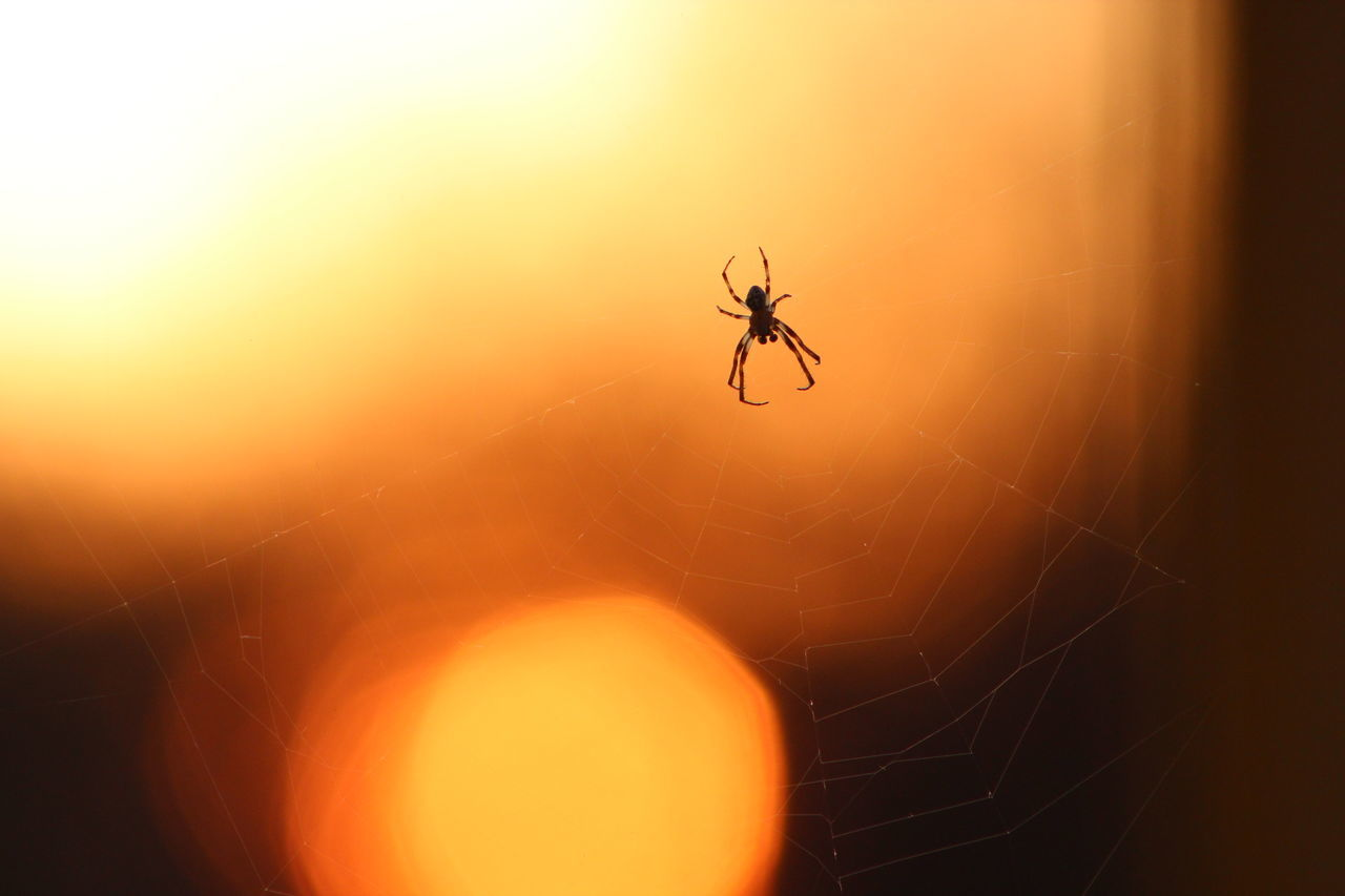 No Edit/no Filter Sunset Beauty In Nature Close-up Fragility Day Animal Wildlife Beauty In Nature No People Outdoors Web Spider Web Animals In The Wild Nature Insect Spider Animal Themes One Animal Nature EyeEm Nature Lover EyeEm Best Shots 43 Golden Moments Sun Maty-ér Bokeh