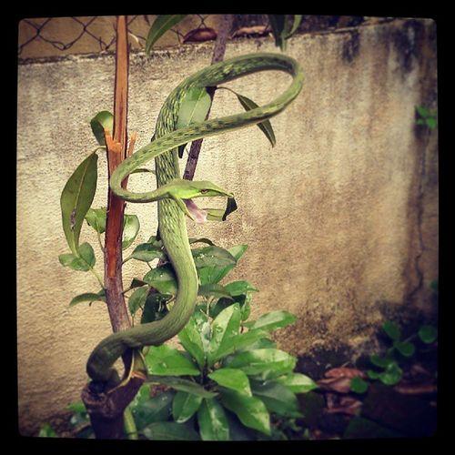 Vhine snake attackin!!:O