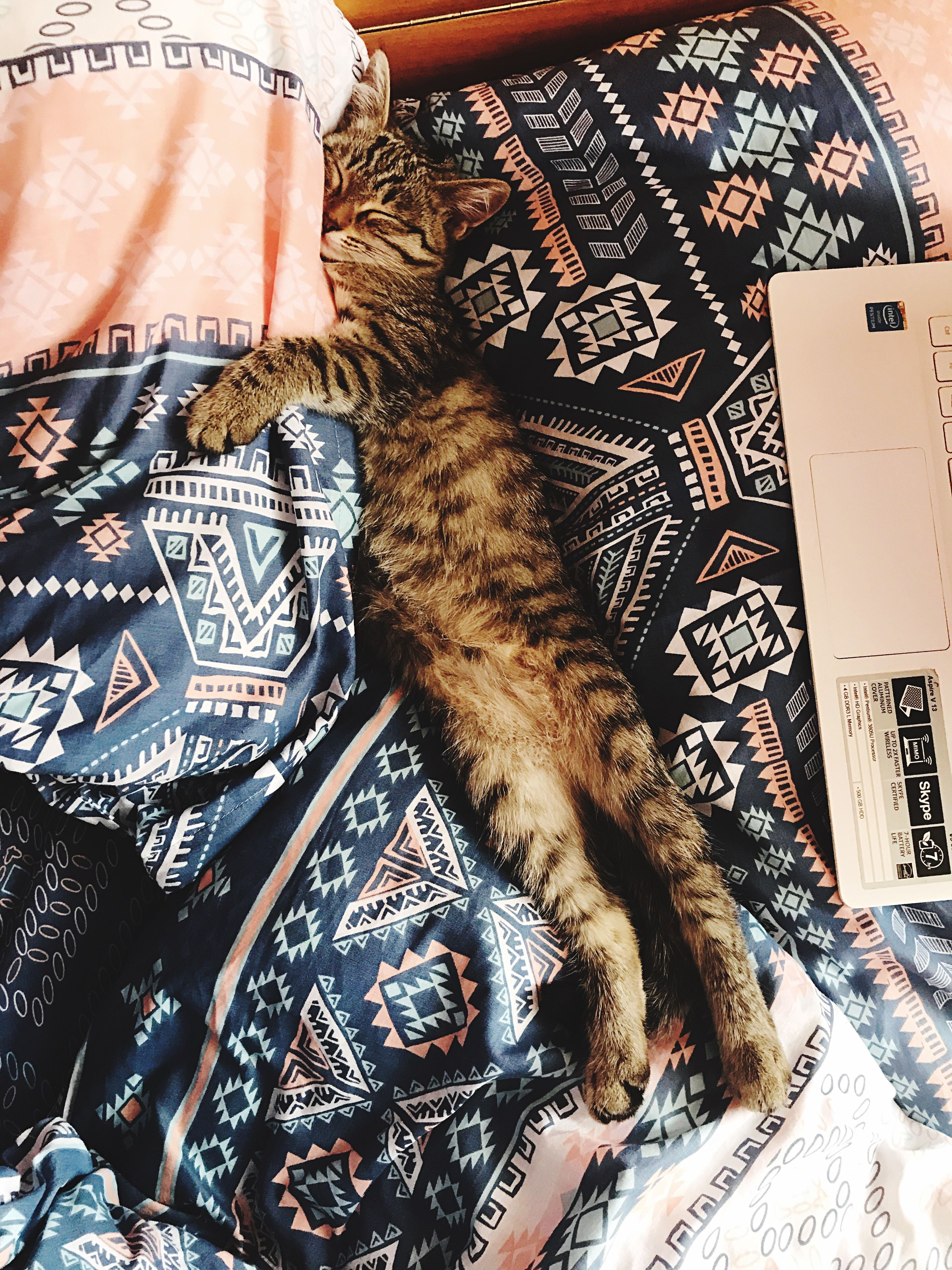 indoors, high angle view, domestic cat, domestic animals, mammal, one animal, pets, animal themes, feline, bed, no people, close-up, day