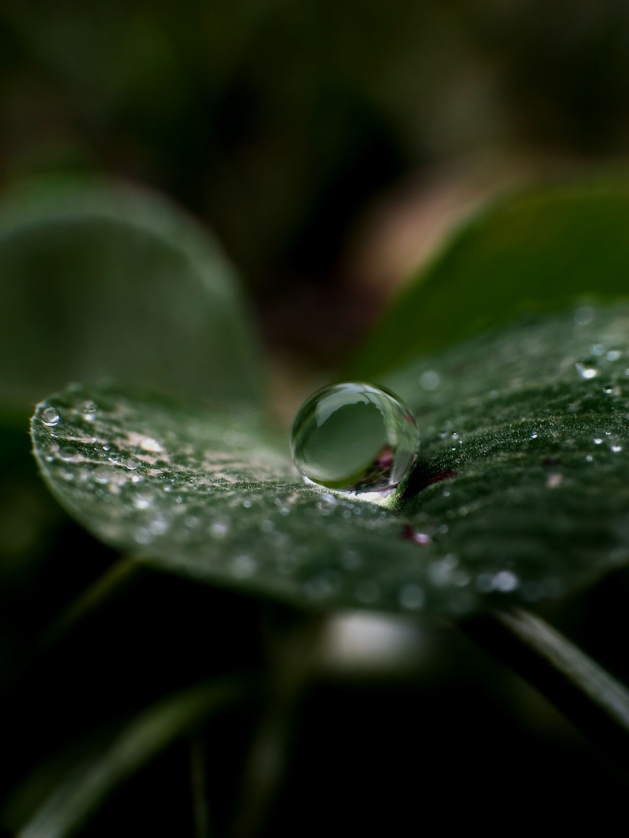 Beautiful stock photos of nature, leaf, wet, close-up