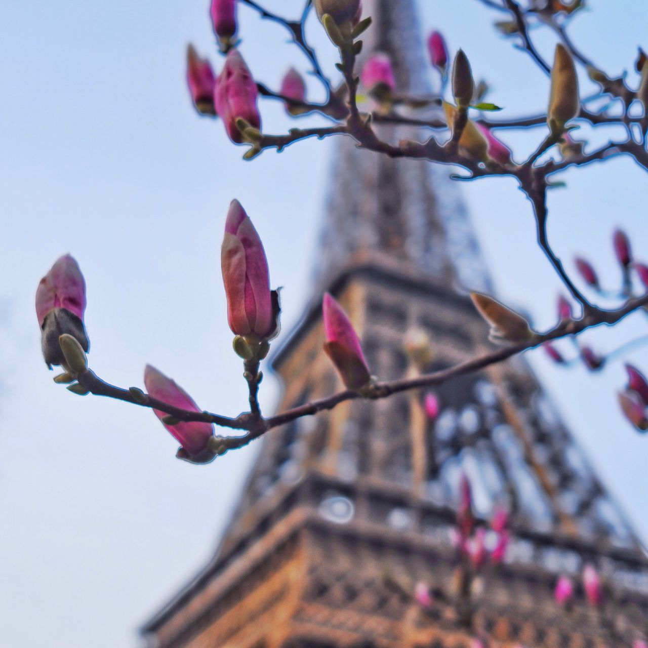 Pastel Power Paris Eiffel Tower Flowers