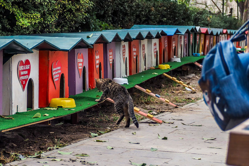 Antalya City Turkey Turkey Cat Animal Themes Animals In The Wild Architecture Bird Built Structure Cat House Day Domestic Animals Mammal No People One Animal Outdoors Tree