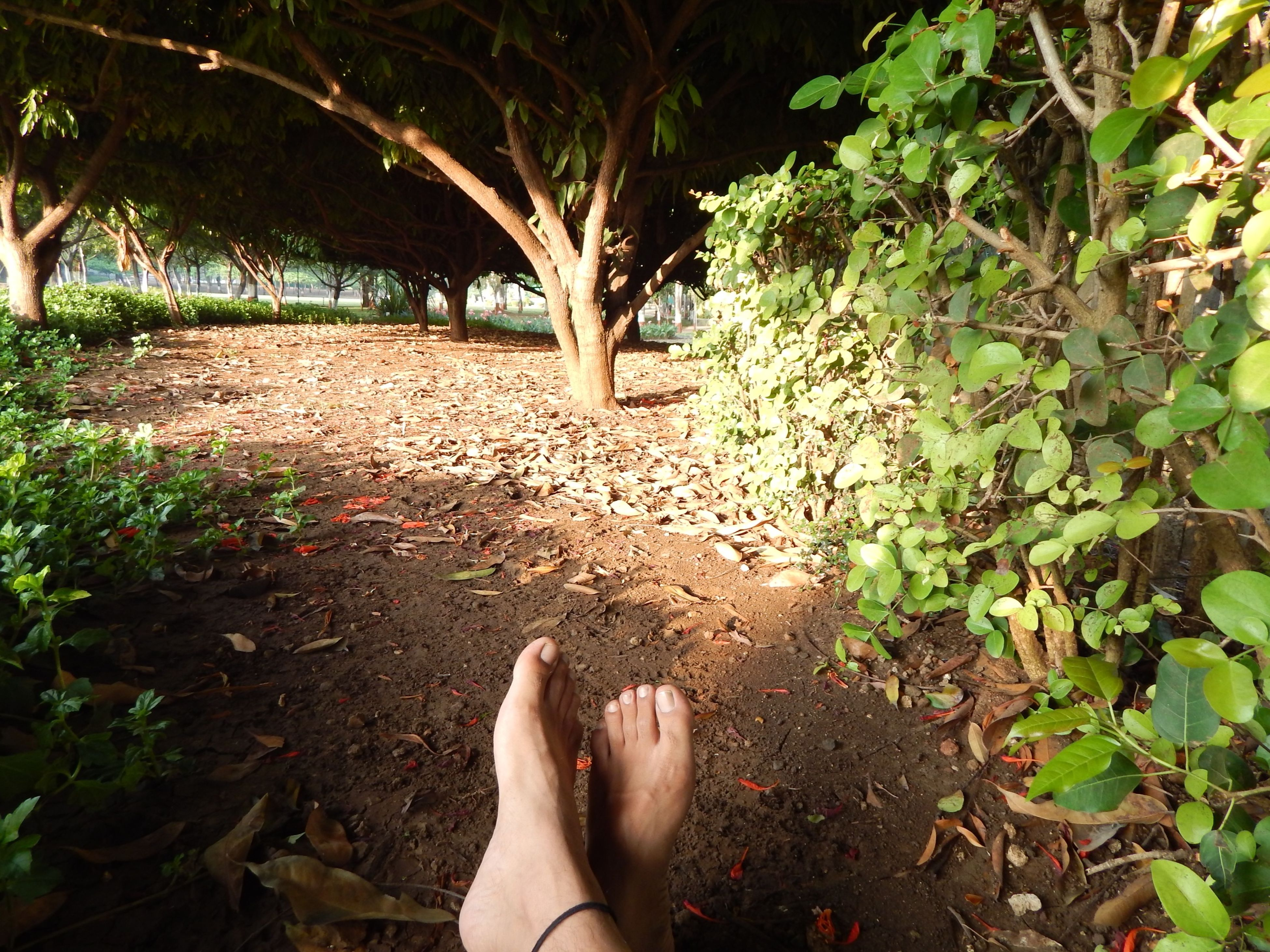 personal perspective, low section, person, human foot, leaf, barefoot, lifestyles, leisure activity, part of, unrecognizable person, high angle view, nature, plant, outdoors, day