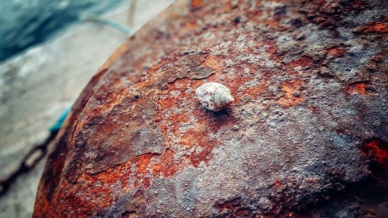 Shell Rusty Capepoint GrungeStyle Colorful Port Life Textures And Surfaces Grungy Textures Colors Of Nature Shells Shells🐚 Focus On Foreground Rusty Metal Grunge It Up Check This Out Taking Photos Samsung Galaxy S6 Edge Samsungphotography Smartphonephotography Eye4photography  EyeEm Gallery EyeEm Best Shots Angleshot At The Port