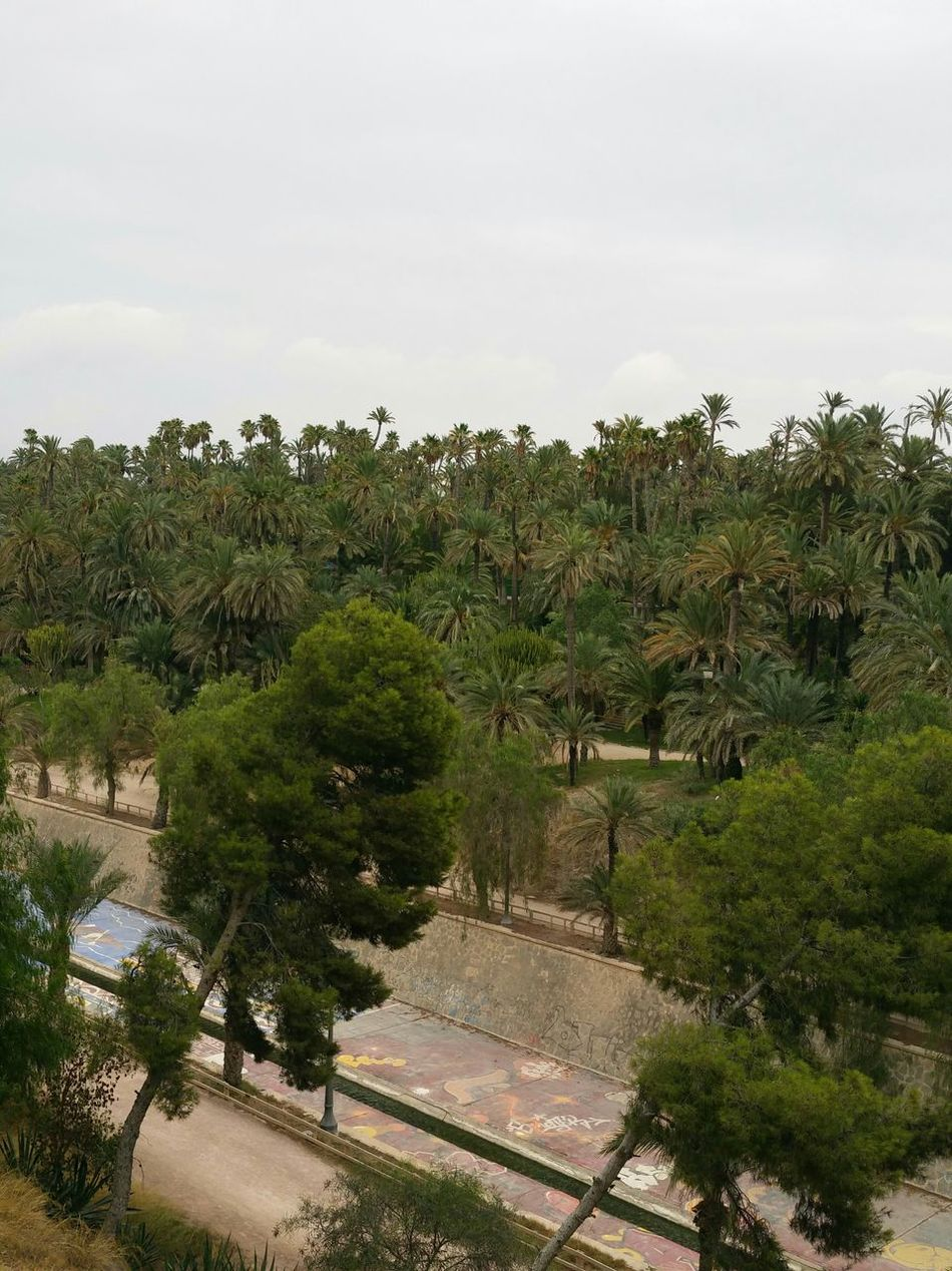 Taking Photos First Eyeem Photo Relaxing Elche Palmeral De Elche UNESCO World Heritage Site Popular Photos Landscapes With WhiteWall