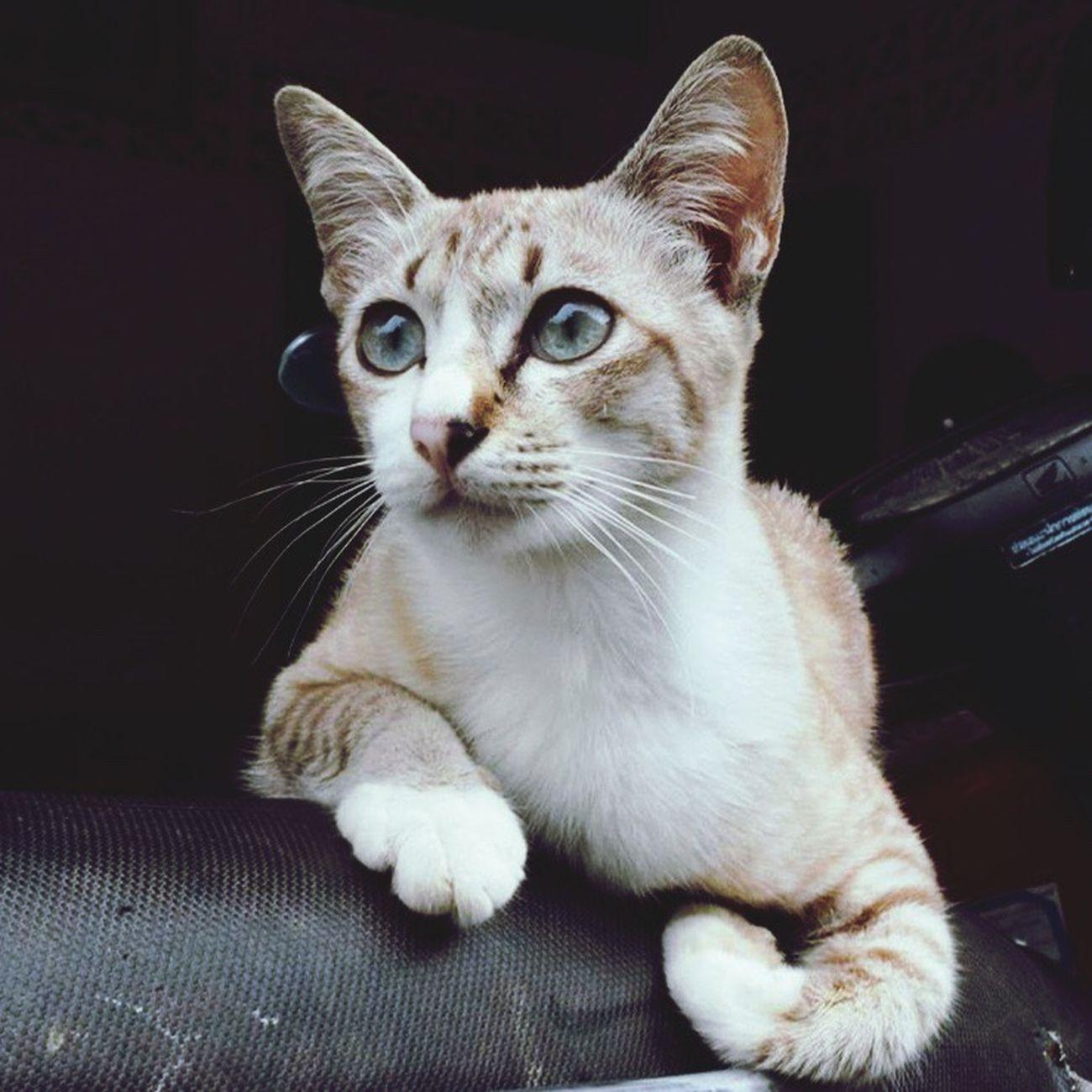 Pets Cat Thailand Nakhon Si Thammarat 😘🙈