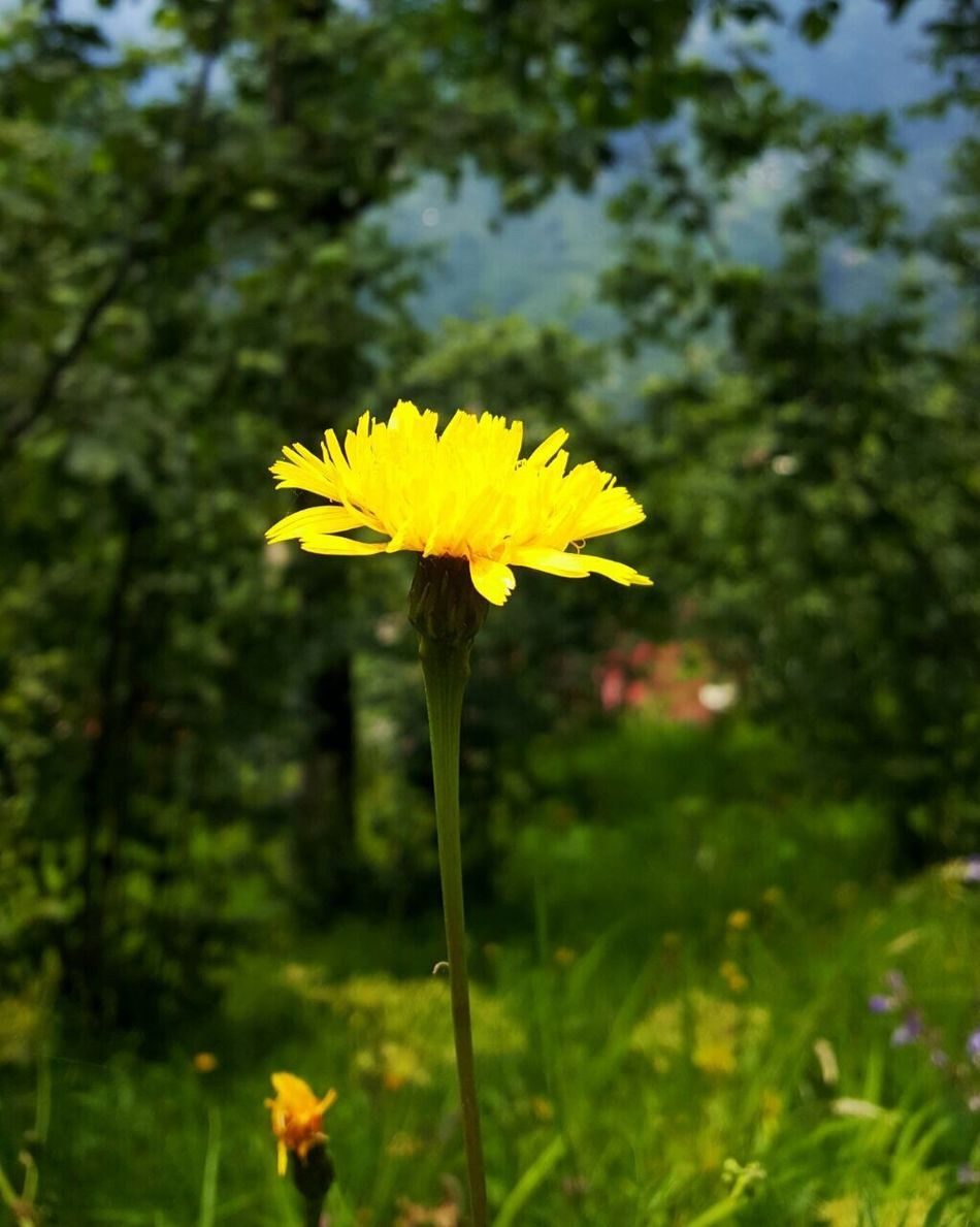 Original Check This Out Hanging Out Hello World Taking Photos Relaxing Enjoying Life Flowers Yellow View Followme