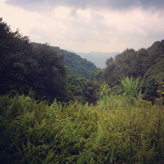 綠森林 白紀仁 一個人 帽峰山 ???????????