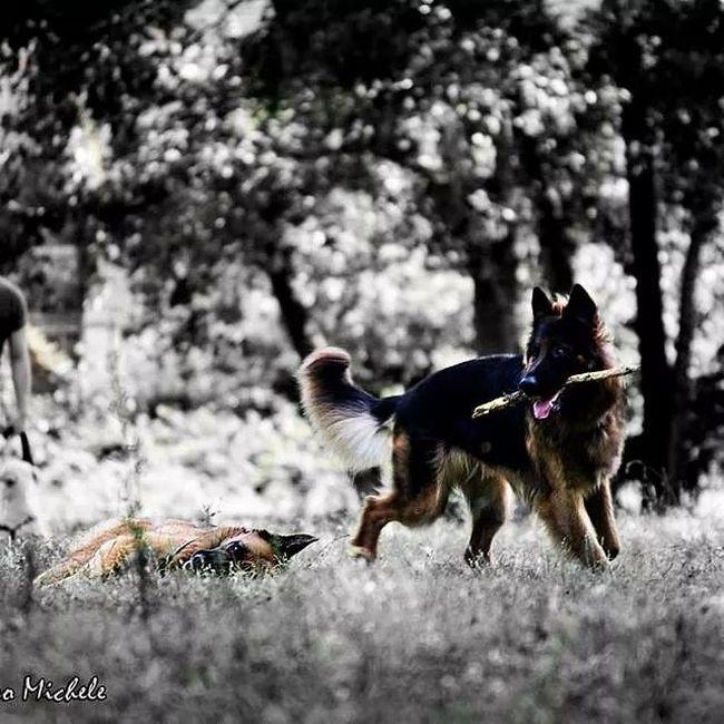 Sun Summer2014 Dogs Instagram Vita Amore Cuore Love Realx Instant AndroidPhotography Canon1100d Bestofday Kk Picturoftheday Tagsforlikes Tranquillità R