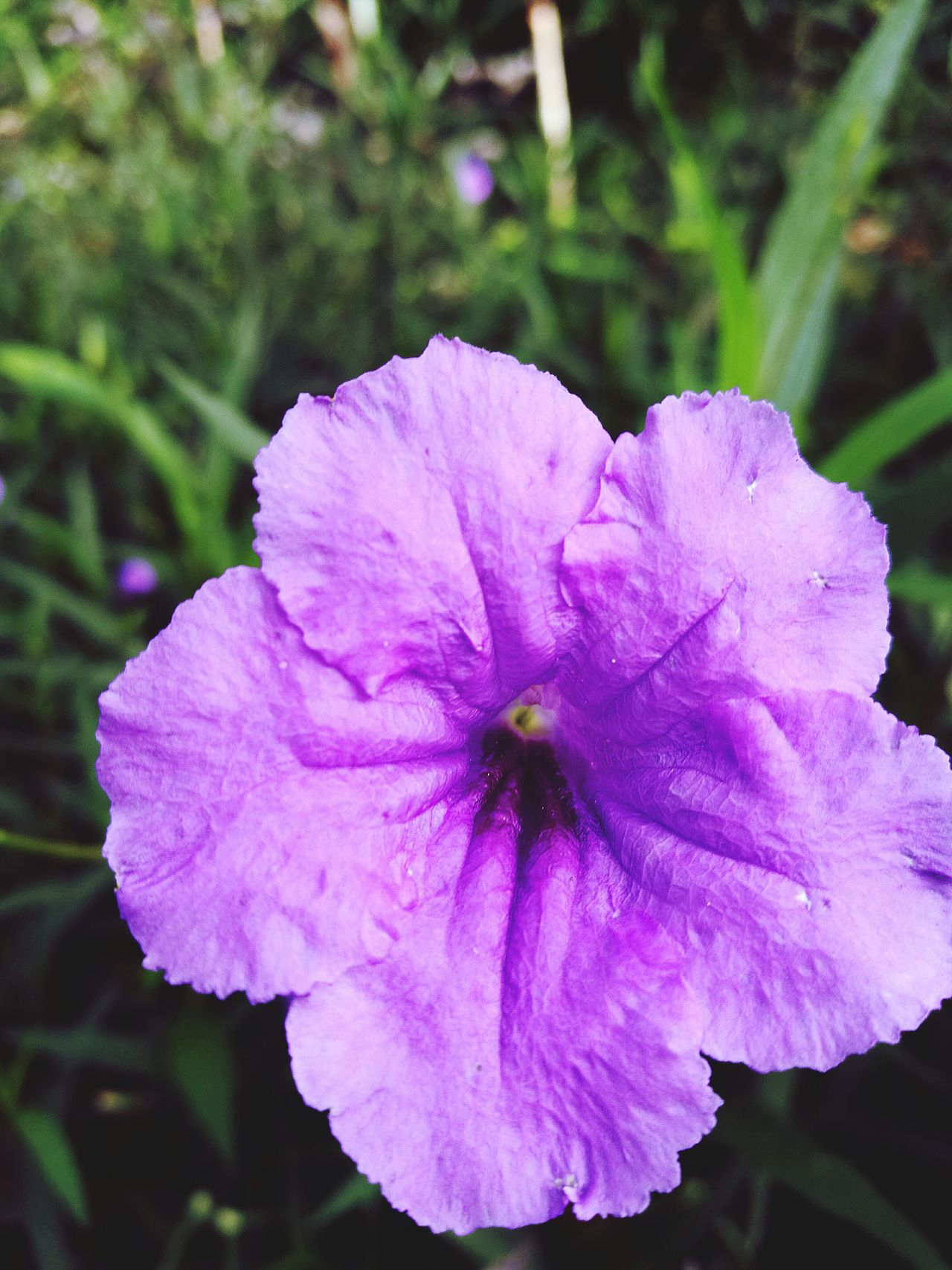 Flower Purple Nature Close-up Freshness Flower Head Beauty In Nature Growth Plant No People Outdoors Huaweip9photos Leicalens Leica_camera Tropical Flower