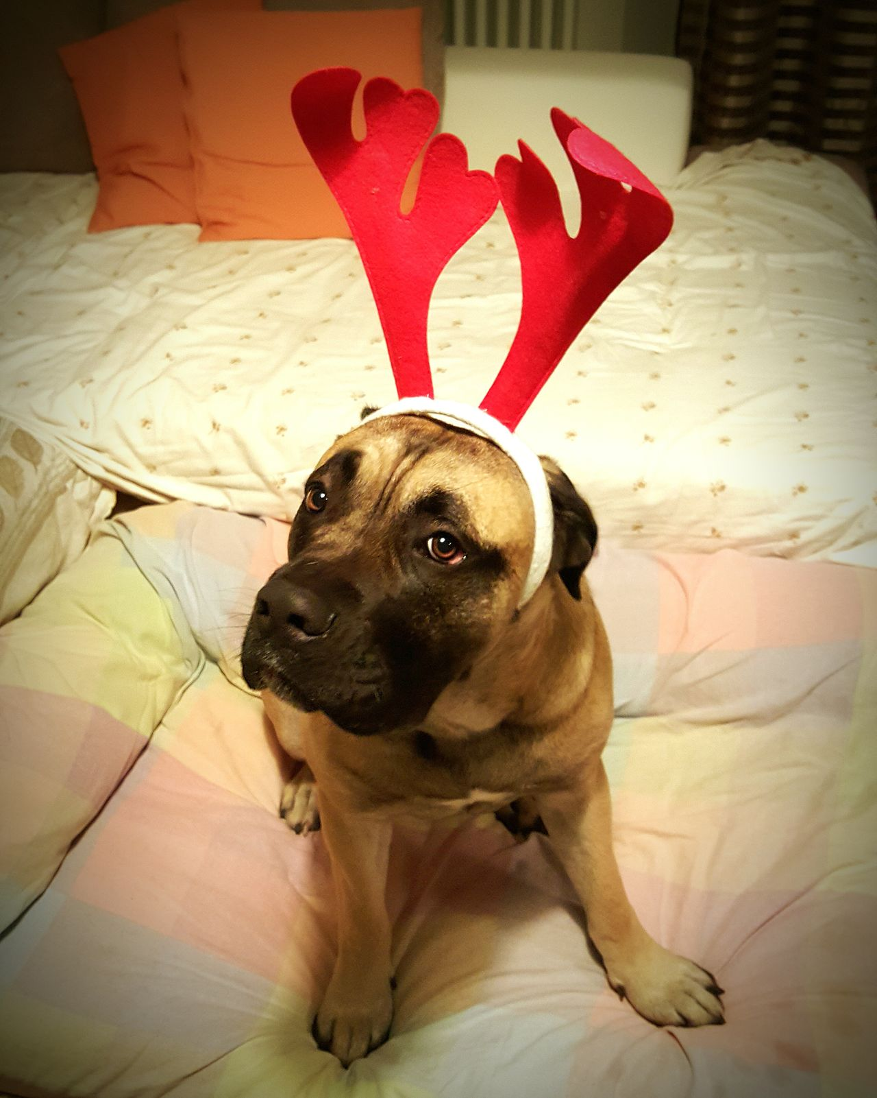 Cheese! Mydog♡ I Love My Dog Chicagone Dog❤ Enjoy ✌ Happy Time Christmastime Christmas Around The World Christmas Decorations FIESTA!