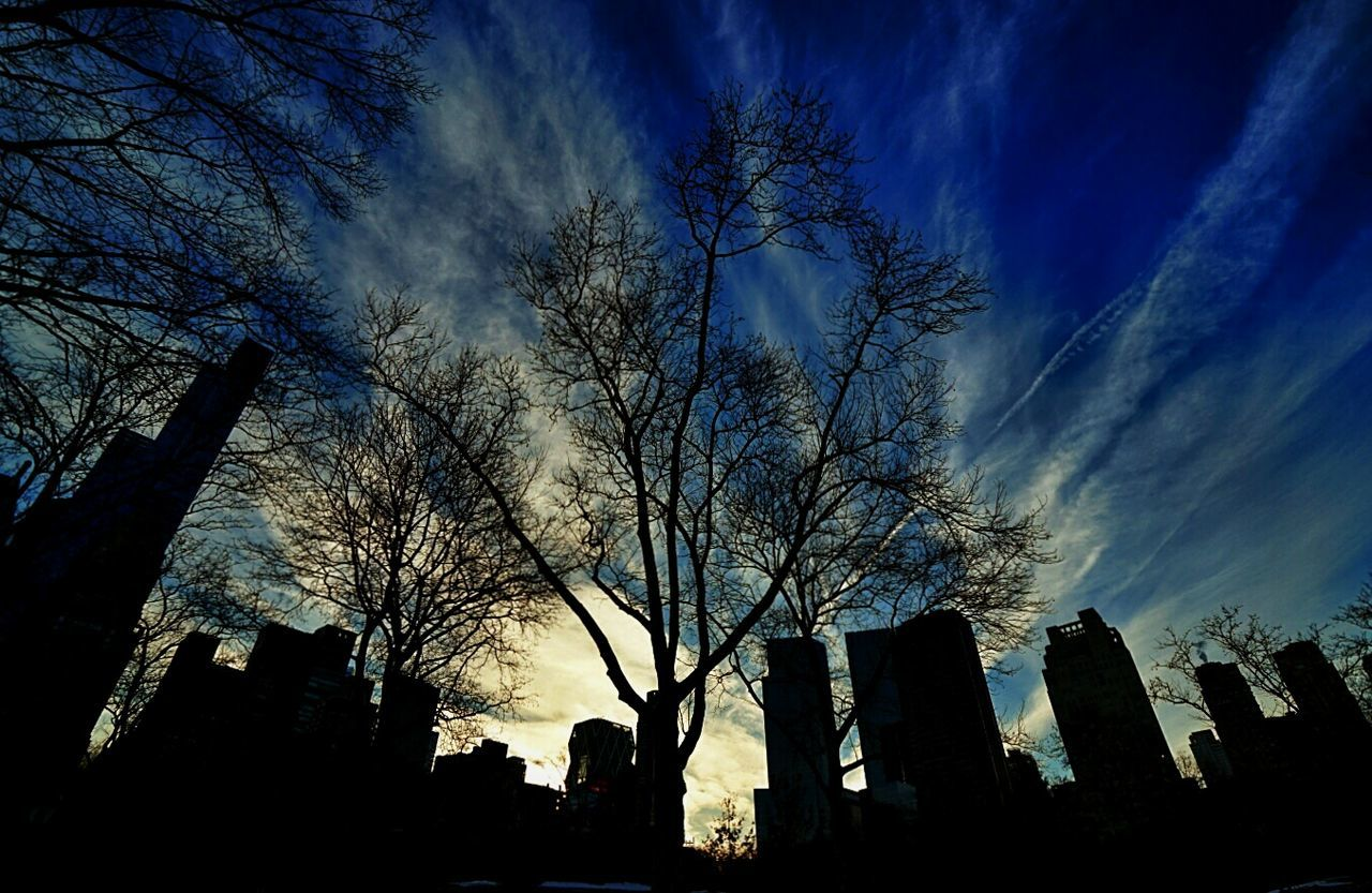 USA Photos Hugging A Tree Cityscapes Darkness And Light Light And Shadow Trees Central Park Clouds And Sky The Best Of New York Streamzoofamily Cloudpark Treepark Seeing The Sights Skypark Blue Wave 43 Golden Moments