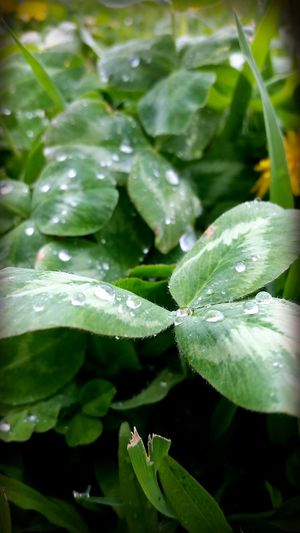 Today Water Water Reflections Rain Drops Nature
