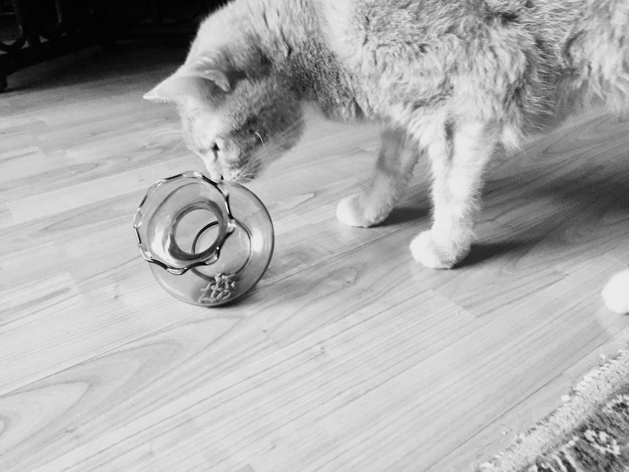 Black And White Photography Blackandwhite Black And White Cat Blackandwhite Portrait Animal Themes 3XSPUnity EyeEmNewHere Ginger Cat Playing Cat From Myself My Project My Cat♥ SuperCat Sweet Cat Cat Thinking Cat Photography Katzenfotografie Katz 🐱 Cats Posing Cat Lovers