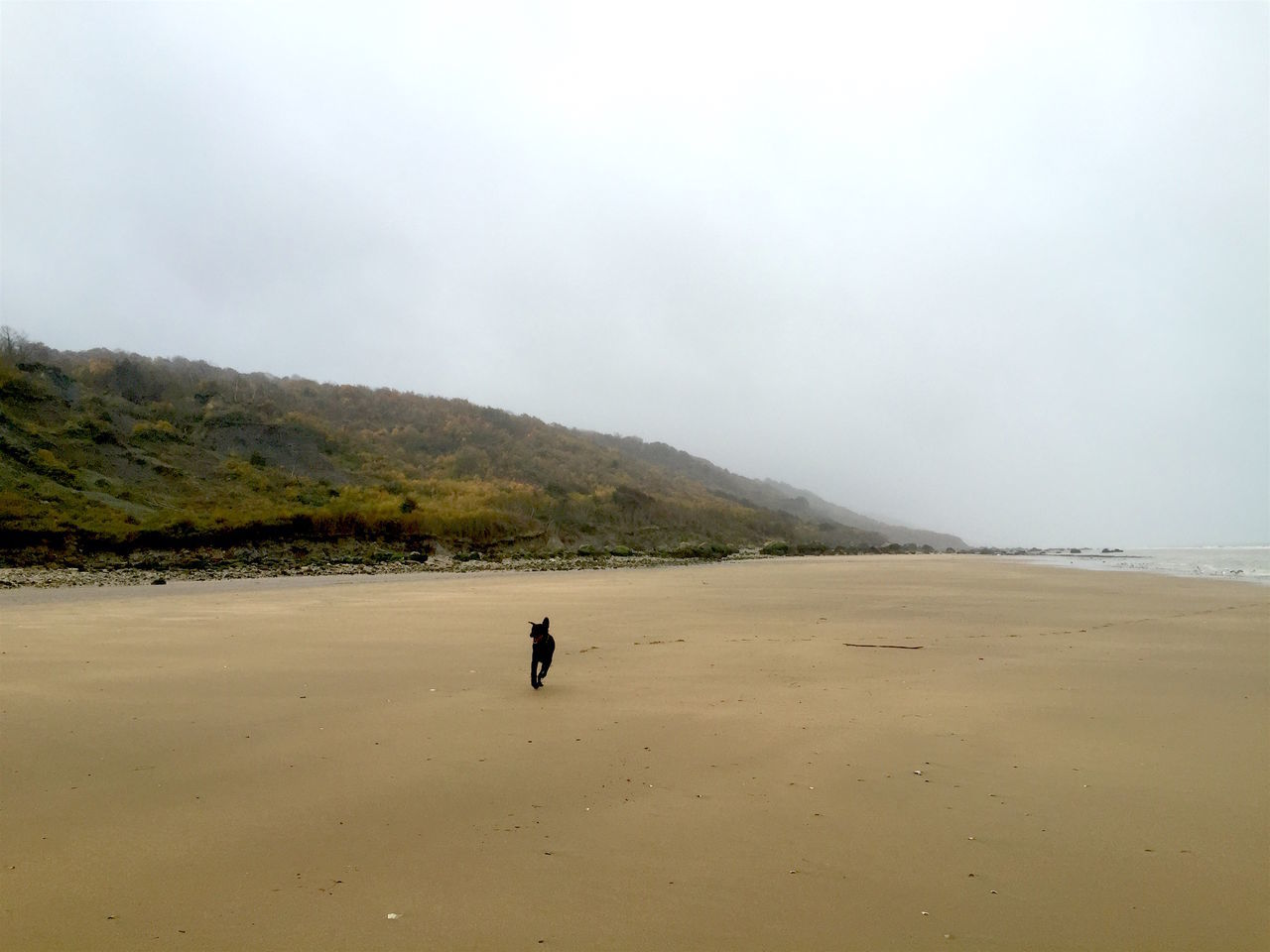 Beach Beach Photography Chien Dog Falaise Fog Happy Happy Dog Landscape Misty Weather Nature Nature Nature Photography Normandie Normandy Normandy Beach Outdoors Plage Plage Normande Running Dog Scenics Vaches Cow Campagne Country Champs Fields Herbes Nuages Ciel Walk
