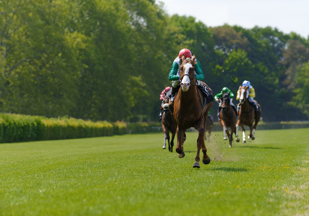 Horserace Brown Day Distance Domestic Animals Extreme Sports Field Fight Grass Grassy Green Color Horse Horseback Riding Horserace Horseracing Jockey Landscape Mammal Outdoors Race Racehorses Racingday Round Sky Speed Working Animal