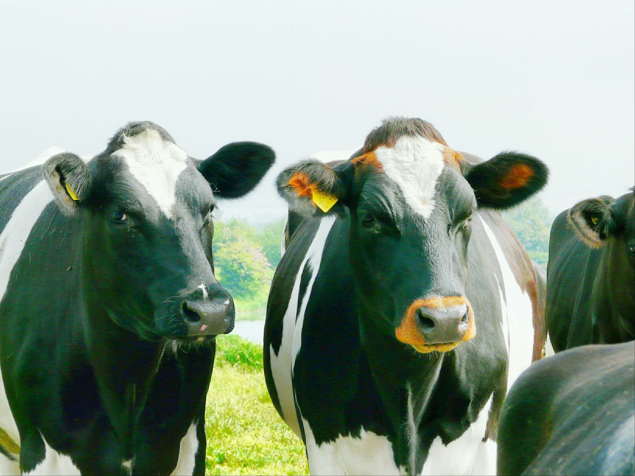 Nature On Your Doorstep Somerset Levels Uk Nature Natures Diversities Relaxing Taking Photos Animals Farme Animals Cow's