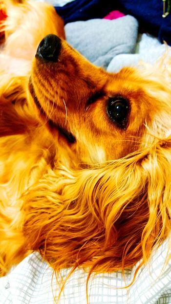 Dogslife Dog❤ Dog Dogs Of EyeEm Dogoftheday Dog Portrait Dogs Dogstagram Dog Love Doglover Dog Lover Doggy Dog Life Doglovers Doglife Doggie Doggielove Doggieselfie Dog Of The Day Dogm