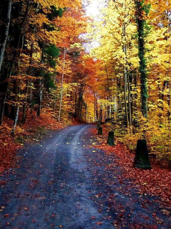 TreePorn Taking Photos Switzerland Autumn🍁🍁🍁 Nature_collection EyeEm Best Shots Eye4photography  EyeEm Nature Lover Autumn Colors Autumn